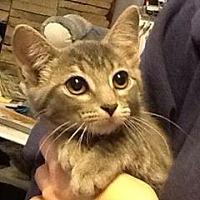 Adopt A Pet :: Lodi - Stafford, VA