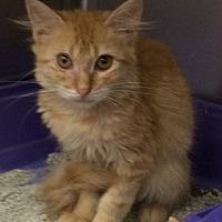 Adopt A Pet :: Lotta Love - Venice, FL