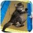 Photo 4 - Domestic Mediumhair Kitten for adoption in Richmond, Virginia - April
