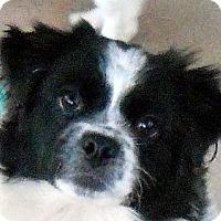 Adopt A Pet :: Thelma - Oakley, CA