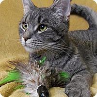 Adopt A Pet :: Elsa - blind - Spencer, NY