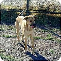 Adopt A Pet :: Morgan - Scottsdale, AZ