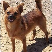 Adopt A Pet :: Prince Charming - Allentown, PA