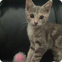 Adopt A Pet :: Dani - Honolulu, HI