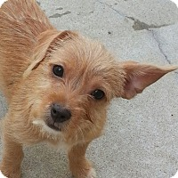 Adopt A Pet :: Sable*ADOPTED* - Chicago, IL