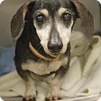 Adopt A Pet :: Snoopy - Beachwood, OH