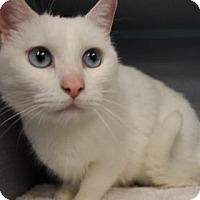 Adopt A Pet :: Isa - Temple, PA