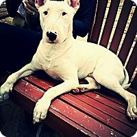 Adopt A Pet :: Jimmy - Houston, TX
