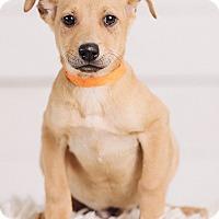 Adopt A Pet :: Finch - Portland, OR