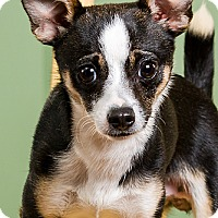 Adopt A Pet :: Leo - Owensboro, KY