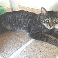 Adopt A Pet :: Coconut - Calimesa, CA