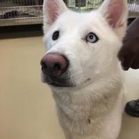 Adopt A Pet :: Mya - Columbia, SC
