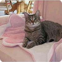 Adopt A Pet :: Nadia - Austin, TX