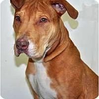 Adopt A Pet :: Roscoe - Port Washington, NY