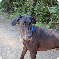 Adopt A Pet :: Dexter - Inver Grove Heights, MN