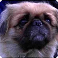 Adopt A Pet :: Snuffles-DE - Mays Landing, NJ