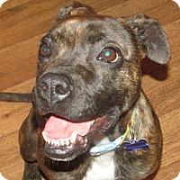 Adopt A Pet :: Elsa - Franklin, VA