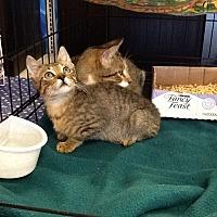 Adopt A Pet :: Joseph - Houston, TX