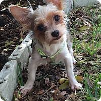 Adopt A Pet :: Bebe - Leesburg, FL