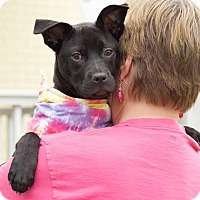 Adopt A Pet :: Stormy - Knoxville, TN