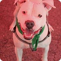Adopt A Pet :: Hendrix - Lexington, KY