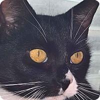 Adopt A Pet :: Buttons - Southington, CT