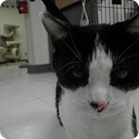 Adopt A Pet :: Ashton - Milwaukee, WI