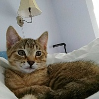 Adopt A Pet :: Spunky - Marietta, GA