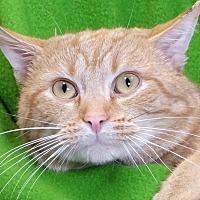 Adopt A Pet :: Mew Mew - Renfrew, PA