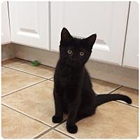 Adopt A Pet :: SAFFRON - Hamilton, NJ