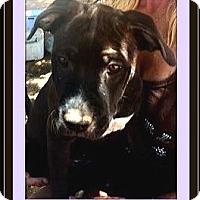 Adopt A Pet :: TigerLily - Rancho Cucamonga, CA