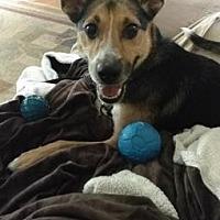 Adopt A Pet :: Buster DeMarie - DeSoto, IA