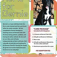 Adopt A Pet :: Bernie - Dublin, OH