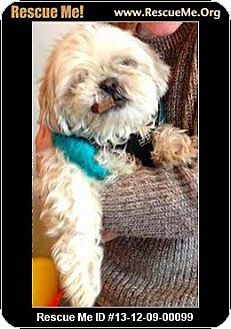 Shih Tzu Dog for adoption in Boulder, Colorado - Petey