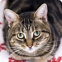 Adopt A Pet :: Zena - El Cajon, CA