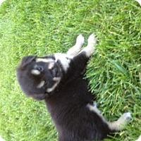Adopt A Pet :: Memphis - Palmyra, WI