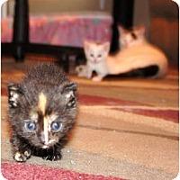 Adopt A Pet :: Kate - Xenia, OH