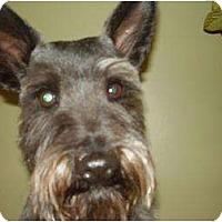 Adopt A Pet :: Diego - Rigaud, QC