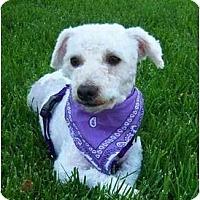 Adopt A Pet :: Duffy - La Costa, CA