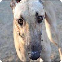 Adopt A Pet :: Farren (Farren Glen) - Chagrin Falls, OH