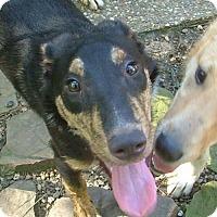 Adopt A Pet :: Roscoe - North Little Rock, AR