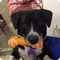 Adopt A Pet :: Vinnie ~ Adoption Pending - Youngstown, OH