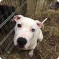 Adopt A Pet :: Zoom - Gainesville, FL