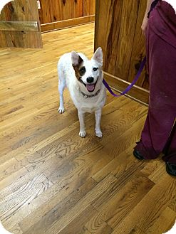 Australian Cattle Dog Mix Dog for adoption in Bowdon, Georgia - Lady Tee