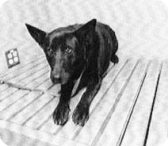 Shepherd (Unknown Type) Mix Dog for adoption in Spokane, Washington - Hunter