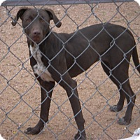 Adopt A Pet :: Sheila - Buchanan Dam, TX
