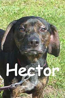 Hound (Unknown Type) Mix Dog for adoption in Warren, Pennsylvania - Hector