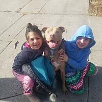 Adopt A Pet :: Charlie - Cuddebackville, NY