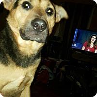 Adopt A Pet :: Tessy - Wyoming, MI