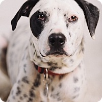 Adopt A Pet :: Axel - Portland, OR